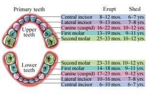 teeth numbers pediatric