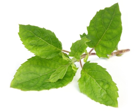 how to get rid of yellow teeth with holy basil leaves