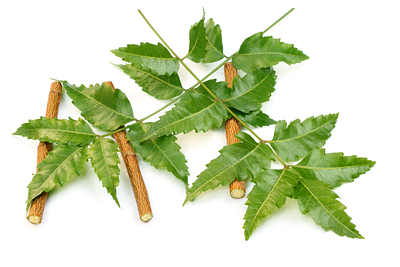 margosa neem leaves twigs to get rid of yellow teeth